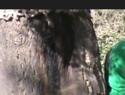 Turbanli ormanda